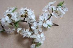 Ακόμα ρύθμιση ζωής των λουλουδιών Στοκ εικόνες με δικαίωμα ελεύθερης χρήσης