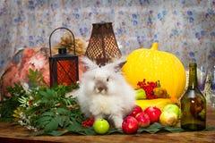 Ακόμα στην ημέρα της ημέρας των ευχαριστιών με τα λαχανικά φθινοπώρου, φρούτα, αντλία Στοκ Εικόνες