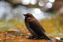 Ακόμη και τα πουλιά πρέπει να δροσίσουν μακριά Στοκ εικόνες με δικαίωμα ελεύθερης χρήσης