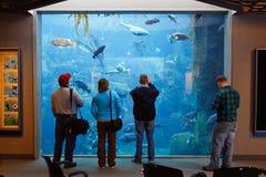 Αλάσκα - άνθρωποι που επισκέπτονται το κέντρο ζωής θάλασσας Στοκ Εικόνες