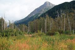 Αλάσκα στοκ φωτογραφία