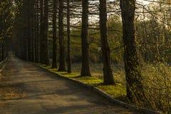 Αλέα βραδιού στο παλαιό πάρκο Στοκ εικόνες με δικαίωμα ελεύθερης χρήσης