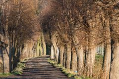 Αλέα δέντρων φθινοπώρου Στοκ Φωτογραφίες