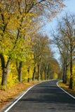 Αλέα κάστανων το φθινόπωρο στοκ εικόνα με δικαίωμα ελεύθερης χρήσης