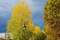 Αλέα με τα δέντρα λευκών στο Παρίσι, Γαλλία Στοκ φωτογραφία με δικαίωμα ελεύθερης χρήσης