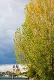 Αλέα με τα δέντρα λευκών στο Παρίσι, Γαλλία Στοκ Εικόνα