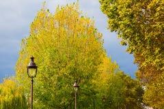 Αλέα με τα δέντρα λευκών στο Παρίσι, Γαλλία Στοκ Φωτογραφία