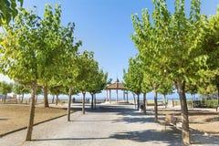 Αλέα με τα πράσινα δέντρα στη σειρά και την άποψη θάλασσας Στοκ φωτογραφία με δικαίωμα ελεύθερης χρήσης