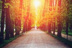 Αλέα με τα πράσινη υψηλή δέντρα, το δρόμο ή την πορεία στο θερινό ηλιοβασίλεμα, μαγικό τοπίο Στοκ εικόνα με δικαίωμα ελεύθερης χρήσης