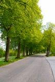 αλέα πράσινη Στοκ εικόνα με δικαίωμα ελεύθερης χρήσης