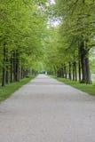 αλέα πράσινη Στοκ Εικόνες