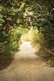 αλέα πράσινη Στοκ φωτογραφία με δικαίωμα ελεύθερης χρήσης