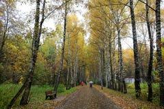 Αλέα σημύδων στο πάρκο το φθινόπωρο Στοκ εικόνα με δικαίωμα ελεύθερης χρήσης