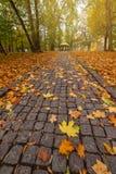 Αλέα στο καλυμμένο πάρκο φύλλωμα φθινοπώρου στοκ εικόνες