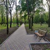 Αλέα στο πάρκο με τα αποβαλλόμενα δέντρα στοκ φωτογραφία με δικαίωμα ελεύθερης χρήσης