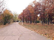 Αλέα στο πάρκο με τα ζωηρόχρωμα δέντρα στην πλευρά στοκ εικόνες