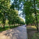 Αλέα στο πάρκο Pushkin σε Kramatorsk Τα κάστανα είναι ανθίζοντας στοκ φωτογραφία με δικαίωμα ελεύθερης χρήσης