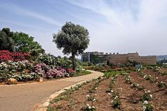 Αλέα στο ροδαλό πάρκο και το υπουργείο Οικονομικών του Ισραήλ Στοκ εικόνες με δικαίωμα ελεύθερης χρήσης