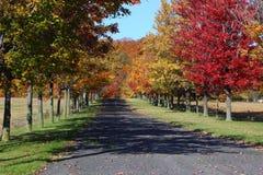 Αλέα το φθινόπωρο στοκ φωτογραφίες με δικαίωμα ελεύθερης χρήσης