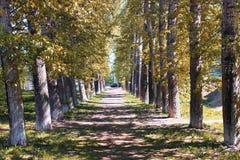 Αλέα των λευκών με τα κιτρινίζοντας φύλλα στα τέλη του καλοκαιριού Στοκ εικόνες με δικαίωμα ελεύθερης χρήσης