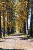 Αλέα των λευκών με τα κιτρινίζοντας φύλλα στα τέλη του καλοκαιριού Στοκ φωτογραφία με δικαίωμα ελεύθερης χρήσης