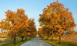 αλέα των δέντρων κερασιών Στοκ εικόνες με δικαίωμα ελεύθερης χρήσης