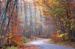 Αλέα φθινοπώρου Στοκ Φωτογραφίες