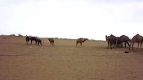 Αλατισμένη έρημος Maranjab Kashan φιλμ μικρού μήκους