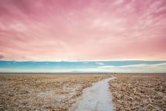 Αλατισμένο τοπίο από τη λιμνοθάλασσα cejar στο Andesof το Altiplano της Βολιβίας στοκ εικόνα με δικαίωμα ελεύθερης χρήσης
