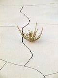 αλατούχο χώμα Στοκ φωτογραφία με δικαίωμα ελεύθερης χρήσης