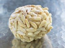 αλγερινό πεύκο ζύμης καρυδιών Στοκ Φωτογραφίες