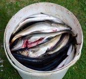 αλιεία δολώματος Στοκ Εικόνα