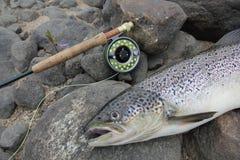 Αλιεία σολομών Στοκ Εικόνες