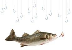 αλιεία ψαριών Στοκ εικόνα με δικαίωμα ελεύθερης χρήσης
