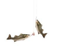 αλιεία ψαριών Στοκ Εικόνες