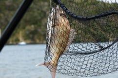 αλιεύοντας αθλητισμός αναψυχής Στοκ Εικόνες