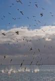 αλιεύοντας με ρολόι Στοκ φωτογραφίες με δικαίωμα ελεύθερης χρήσης