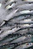 αλιεύστε φρέσκο Στοκ φωτογραφία με δικαίωμα ελεύθερης χρήσης