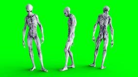 Αλλοδαπή παραμονή μη απασχόλησης Ρεαλιστικά shaders κινήσεων και δερμάτων 4K πράσινο μήκος σε πόδηα οθόνης απεικόνιση αποθεμάτων