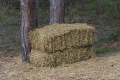 Αλμπέρτα συσκευάζει το αγροτικό καλοκαίρι λιβαδιών τοπίων σανού πεδίων Δέματα σανού κοντά σε ένα δέντρο Στοκ Εικόνες