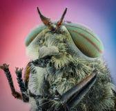αλογόμυγα Κεφάλι με τα μεγάλα μάτια, τις κεραίες και τα πόδια, κινηματογράφηση σε πρώτο πλάνο στοκ εικόνα