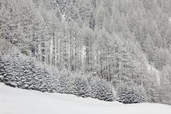 αλπικά δέντρα χιονιού βουνών Στοκ φωτογραφίες με δικαίωμα ελεύθερης χρήσης