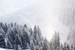 αλπικά δέντρα χιονιού βουνών Στοκ φωτογραφία με δικαίωμα ελεύθερης χρήσης