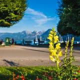 Αλπική όχθη της λίμνης με ένα όμορφο κίτρινο άνθος στο Foregrou Στοκ Φωτογραφίες