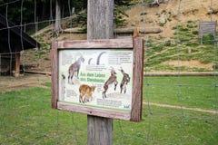 Αλπικός ζωικός πάρκο ή ζωολογικός κήπος σε Bregenz στοκ εικόνες με δικαίωμα ελεύθερης χρήσης