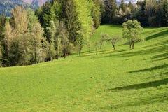 αλπικό αγροτικό έδαφος Στοκ Φωτογραφία