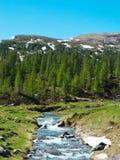 αλπικό ρεύμα ποταμών που ρέει μεταξύ των αλπικών λιβαδιών του devero α Στοκ Φωτογραφία