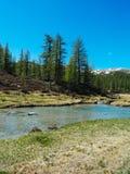 αλπικό ρεύμα ποταμών που ρέει μεταξύ των αλπικών λιβαδιών του devero α Στοκ εικόνες με δικαίωμα ελεύθερης χρήσης