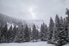 Αλπικό χειμερινό τοπίο, με το φρέσκες χιόνι και την υδρονέφωση, μια φωτεινή ημέρα Στοκ εικόνα με δικαίωμα ελεύθερης χρήσης