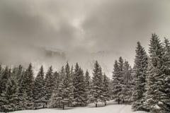 Αλπικό χειμερινό τοπίο, με το φρέσκες χιόνι και την υδρονέφωση, μια φωτεινή ημέρα Στοκ Εικόνες